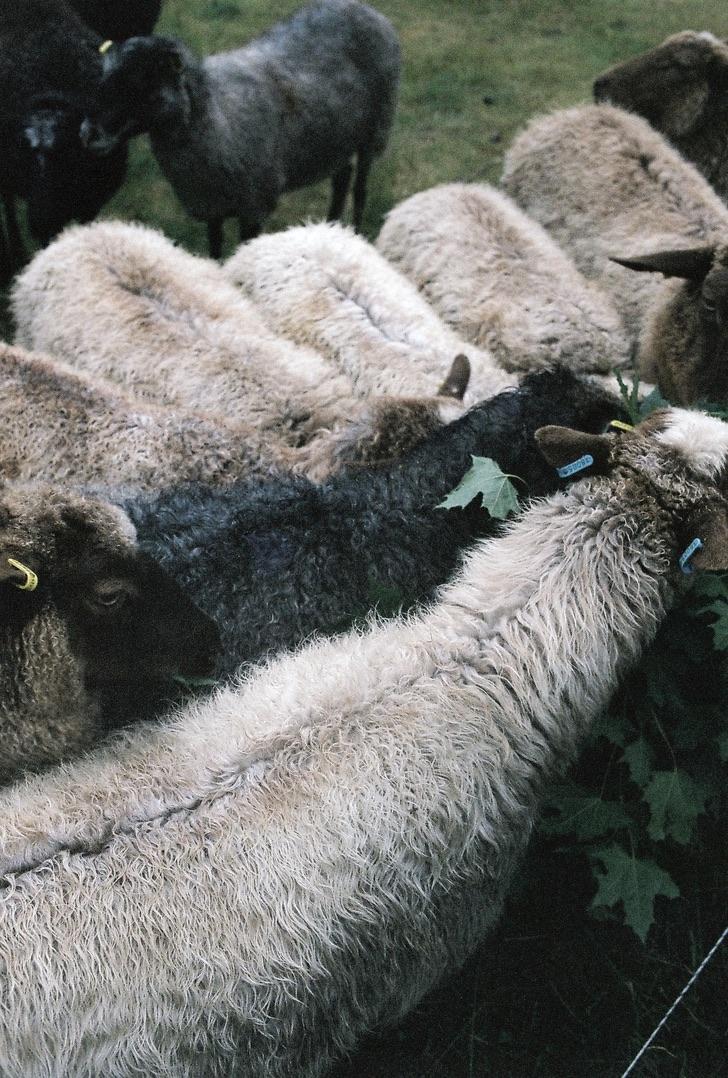 arslan-golic_2019_lamb_canon_1