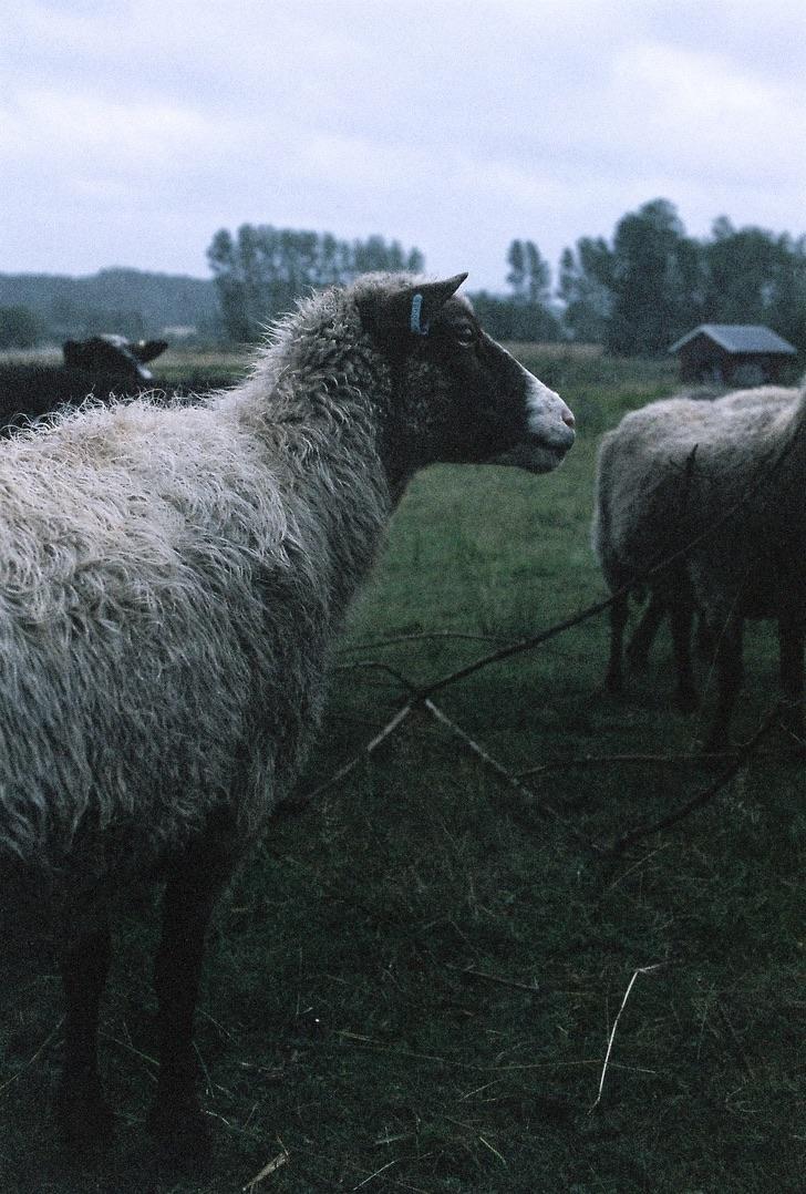 arslan-golic_2019_lamb_canon_3